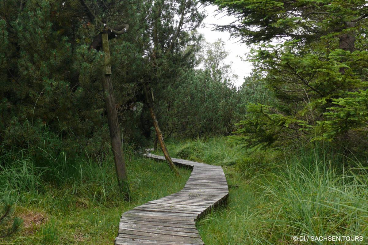 Holzsteg im Hochmoor